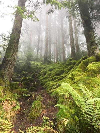 troll forest.jpg